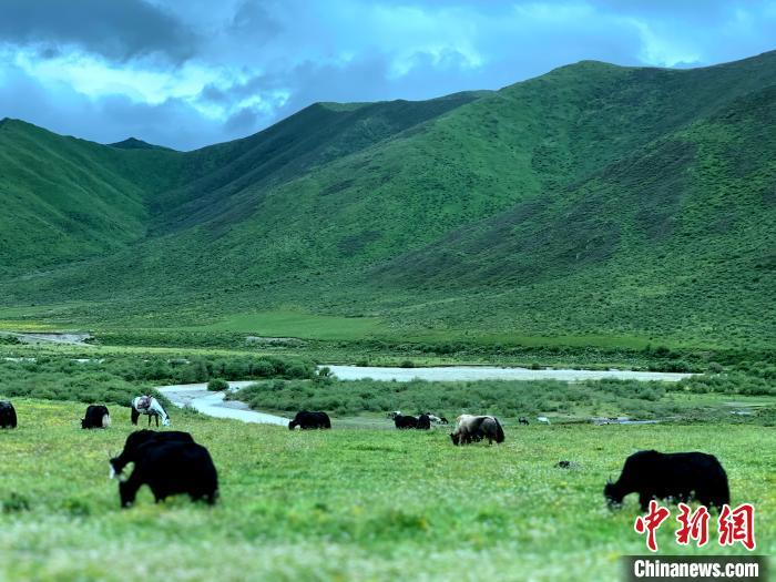 三江源腹地久治生态畜牧业发展带动牧民增收